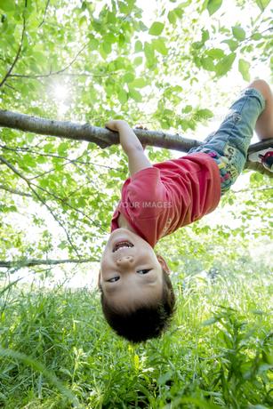新緑の公園で木にぶら下がる男の子の素材 [FYI01075817]