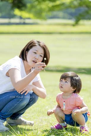 新緑の公園で花を見つめる母親と娘の素材 [FYI01075840]
