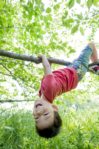 新緑の公園で木にぶら下がる男の子の素材 [FYI01075870]