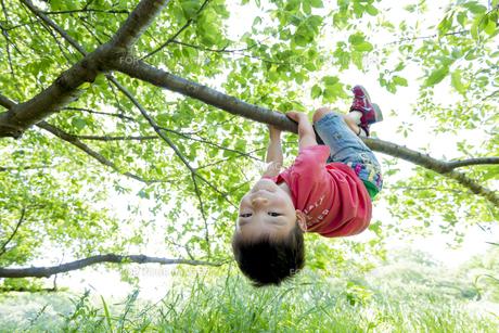 新緑の公園で木にぶら下がる男の子の素材 [FYI01075877]