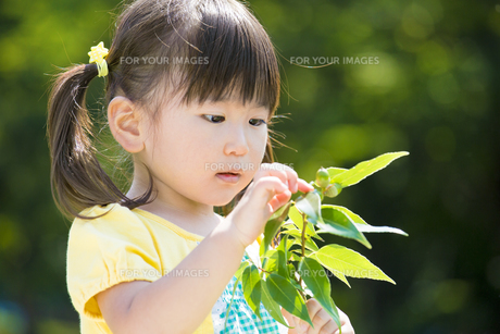 公園でドングリを見つめる女の子の素材 [FYI01075882]