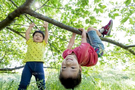 新緑の公園で遊ぶ兄弟の素材 [FYI01075887]