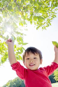 公園で両手を上げる男の子の素材 [FYI01075901]