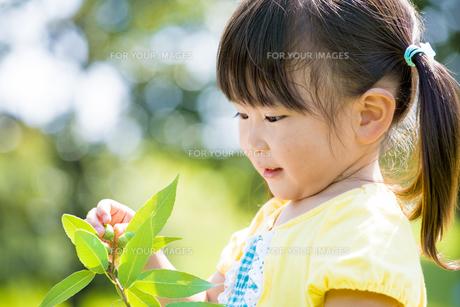 公園でドングリを見つめる女の子の素材 [FYI01075912]