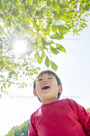 公園で木の枝を見上げる男の子の素材 [FYI01075933]