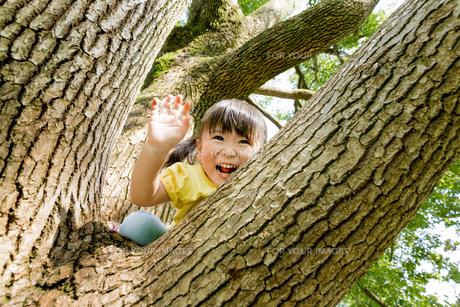 公園の木に登る女の子の素材 [FYI01075942]