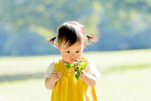 公園でドングリを見つめる女の子の素材 [FYI01075975]