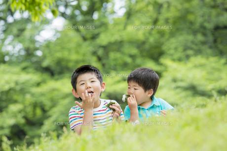 新緑の公園でおにぎりを食べる兄弟の素材 [FYI01075977]