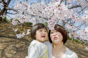 桜の咲く公園で母親と桜を見る娘の素材 [FYI01075980]