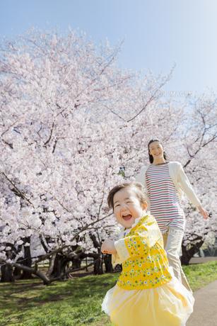 桜の咲く公園で遊ぶ母親と娘の素材 [FYI01076003]