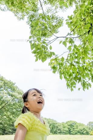 公園で木の葉を見上げる女の子の素材 [FYI01076023]