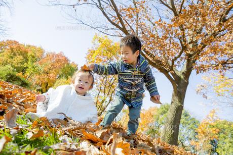 紅葉の公園で落葉遊びをする兄と妹の素材 [FYI01076039]
