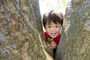公園で木の間から顔を出す男の子の素材 [FYI01076040]