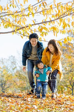 紅葉の公園で遊ぶ息子と両親の素材 [FYI01076052]