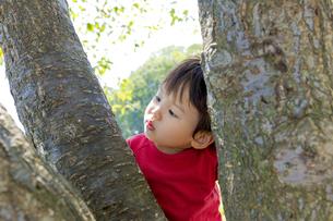 公園で木の枝を見つめる男の子の素材 [FYI01076065]