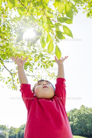公園で両手を上げる男の子の素材 [FYI01076084]