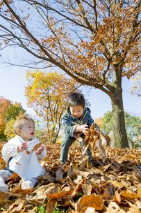 紅葉の公園で落葉遊びをする兄と妹の素材 [FYI01076116]