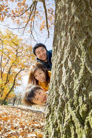 紅葉の公園で遊ぶ息子と両親の素材 [FYI01076118]
