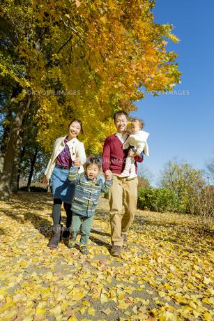 紅葉の公園を手をつないで歩く4人家族の素材 [FYI01076158]