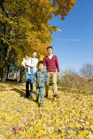 紅葉の公園を歩く4人家族の素材 [FYI01076180]