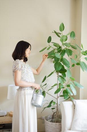 じょうろを持って葉っぱを触る女性の素材 [FYI01077293]