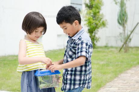 虫かごを持っている子供たちの素材 [FYI01077411]