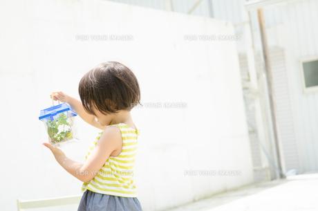 虫かごを覗き込む女の子の素材 [FYI01077719]