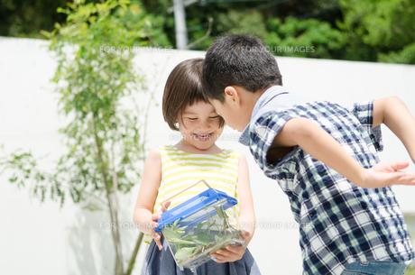 虫かごをのぞいている子供たちの素材 [FYI01077791]