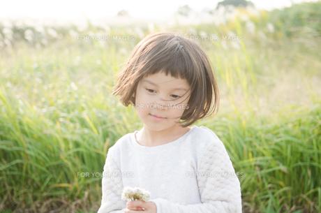 シロツメクサを持っている女の子の素材 [FYI01077897]