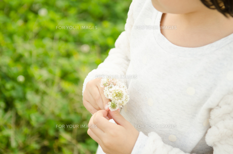 シロツメクサを持っている女の子の素材 [FYI01077917]