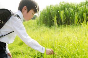ランドセルを背負って虫を捕まえようとしている男の子の素材 [FYI01078020]