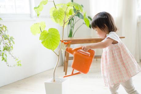 観葉植物に水をあげている女の子の素材 [FYI01078028]