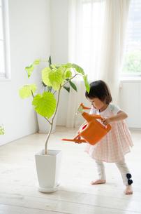 観葉植物に水をあげている女の子の素材 [FYI01078068]