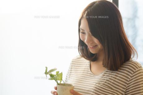 観葉植物を持っている笑顔の女性の素材 [FYI01078268]