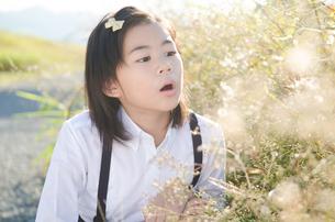 息を吹こうとしている小学生の女の子の素材 [FYI01078304]