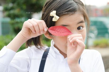 赤い葉っぱを目に当てている小学生の女の子の素材 [FYI01078329]