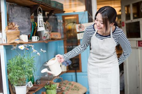 お花に水をあげている女性の素材 [FYI01078514]