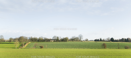 緑豊かな田舎の景色の素材 [FYI01080236]