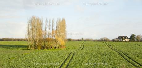 緑豊かな田舎の景色の素材 [FYI01080242]