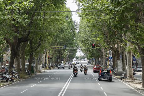 プラタナスの並木道路の素材 [FYI01080443]