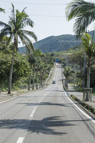 山並みを正面に見るヤシの並木道路の素材 [FYI01080477]