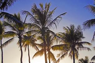 太陽と椰子の木の素材 [FYI01088165]