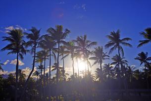 太陽と椰子の木の素材 [FYI01088383]