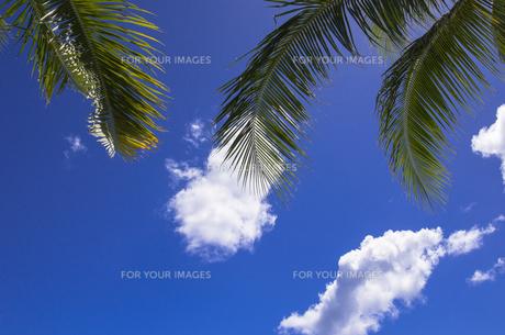 ヤシの葉と雲の素材 [FYI01090654]