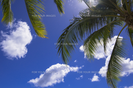 ヤシの葉と雲の素材 [FYI01090659]