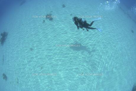 砂地の上を泳ぐダイバーの素材 [FYI01092084]