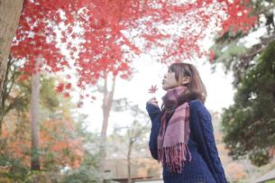 秋の公園で紅葉を眺める女性の素材 [FYI01096588]
