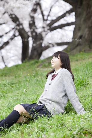 桜と女子高生の素材 [FYI01096692]