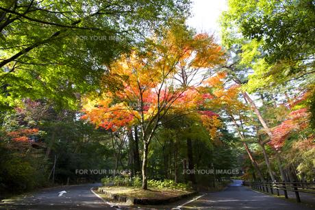 秋の紅葉の神戸再度公園の素材 [FYI01096695]