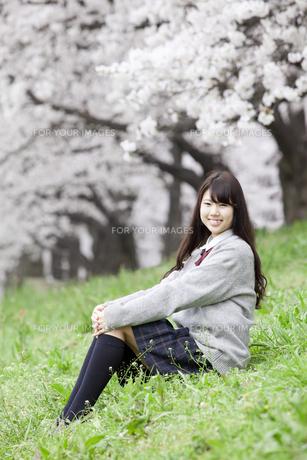 桜と女子高生の素材 [FYI01096707]